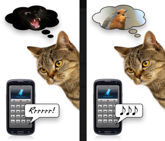 hablar con los gatos
