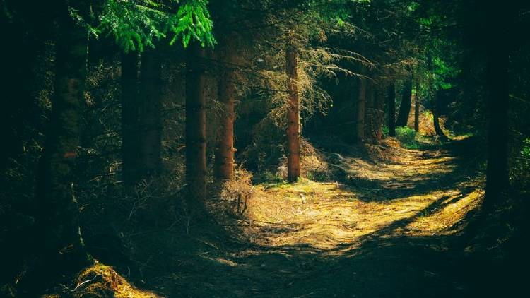caminatas por el bosque con el móvil
