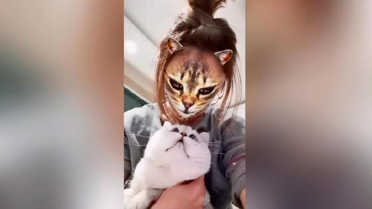 filtro instagram animales