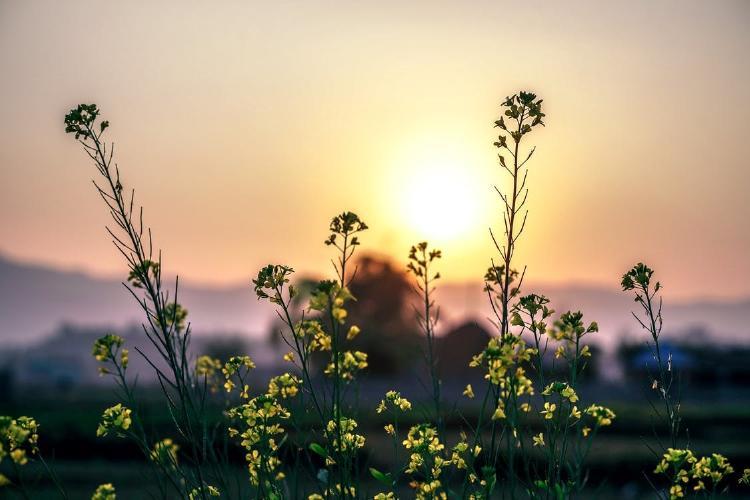 Flores en la naturaleza