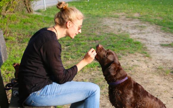 hablar con los perros