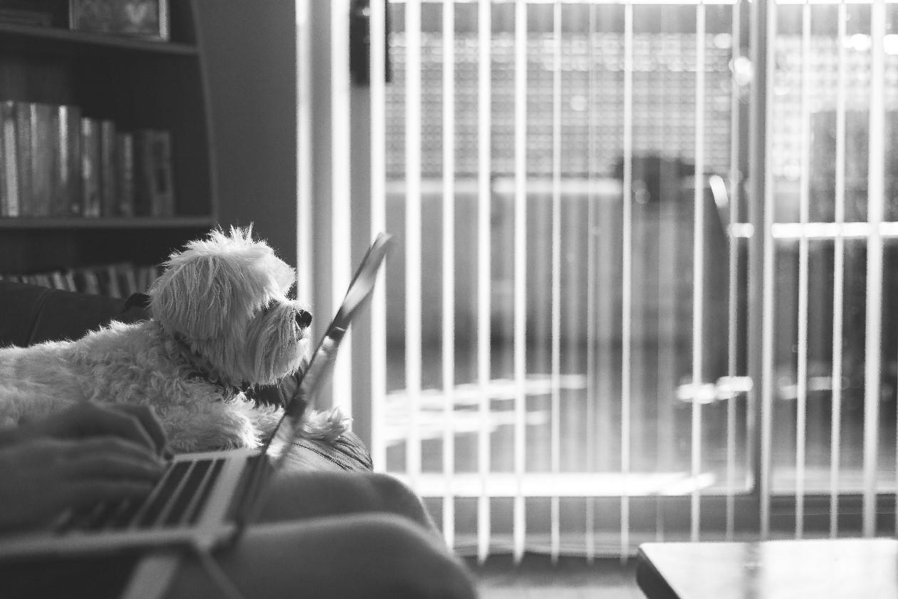 Perro sentado en el sofá