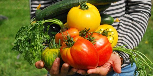 Comercio de hortalizas