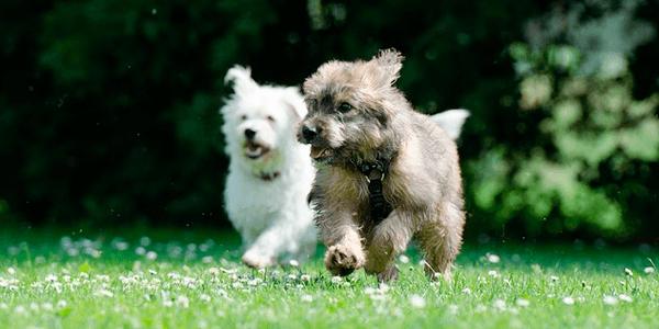 app perros