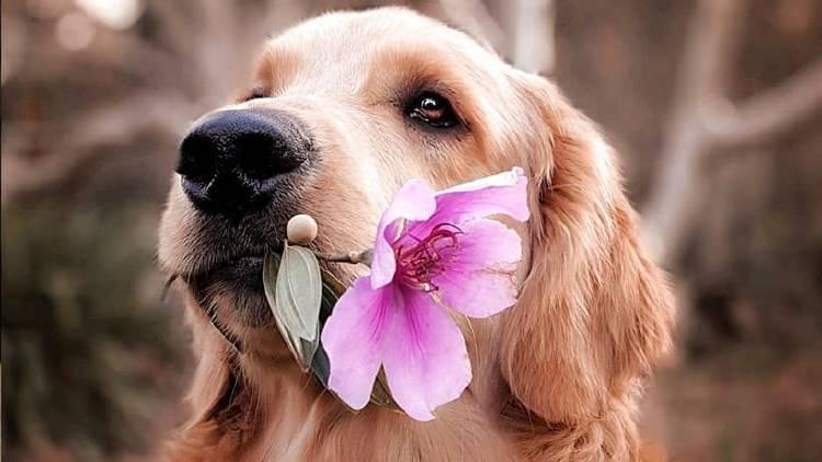 Actividades para divertirnos perro en casa con nuestras mascotas