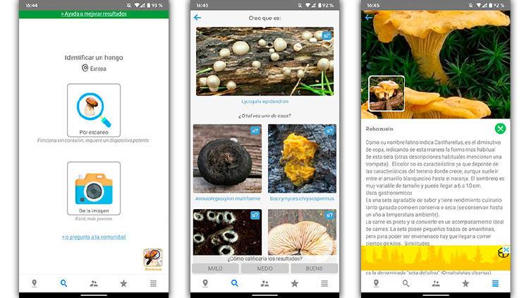 app identificar setas comestibles