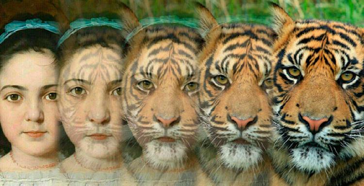 app cambiar cara persona animal