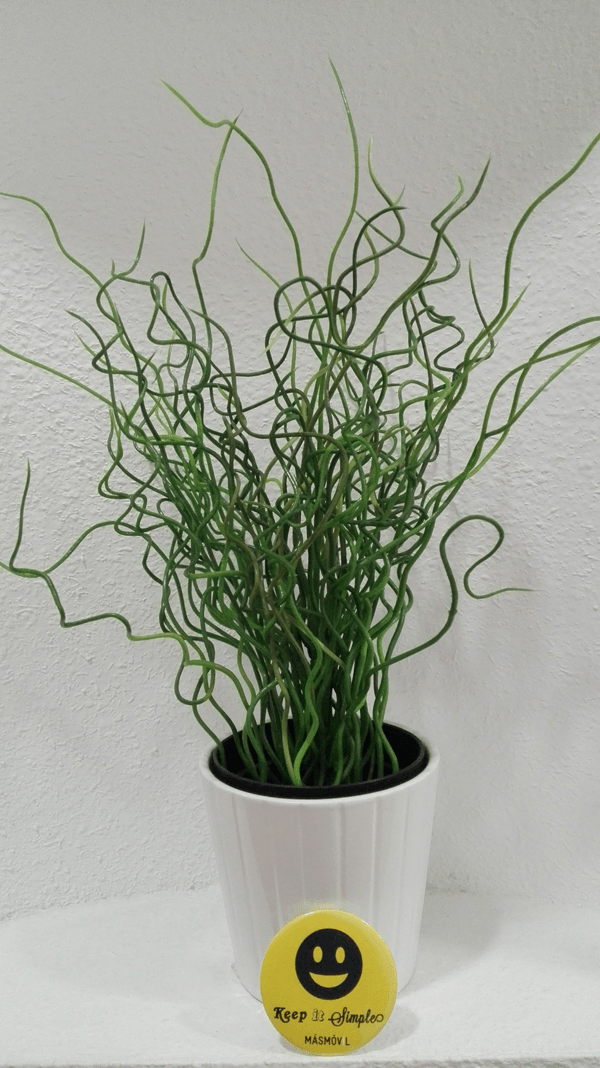 planta fotografiada con Huawei P8 Lite