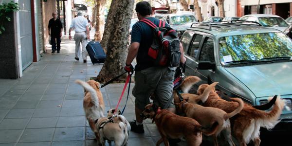 perros | ideas de negocio